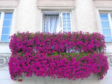 Как вырастить горошек на балконе и лоджии