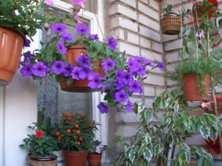 Горошек в цветочных горшках
