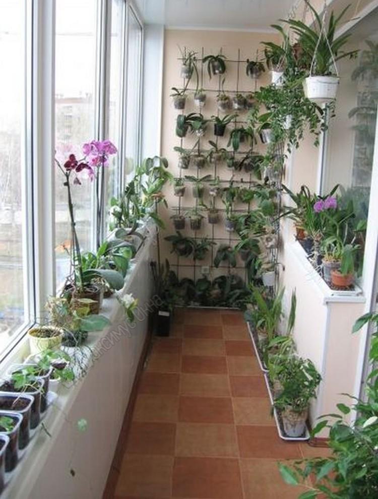 Растения и цветы на балконе