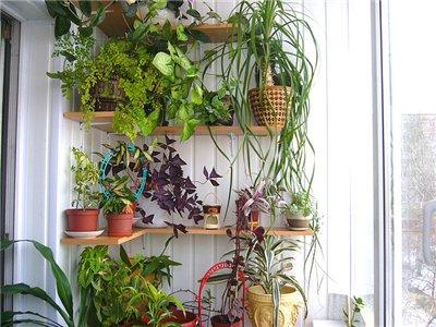 Как сделать зимний сад на балконе и лоджии